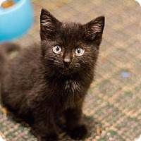 Adopt A Pet :: Langston - Morgantown, WV