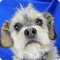 Adopt A Pet :: Mia - Pagosa Springs, CO