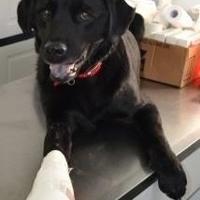 Adopt A Pet :: Trapper - Greensboro, NC