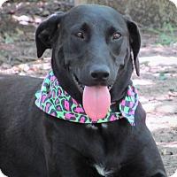 Adopt A Pet :: Tara - Godley, TX