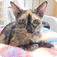 Adopt A Pet :: Caramel - Ridgway, CO