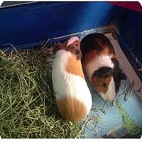 Adopt A Pet :: *Urgent* Hansel & Gretel - Fullerton, CA
