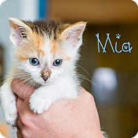 Adopt A Pet :: Mia - Somerset, PA