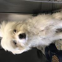 Adopt A Pet :: Bloomer - Phoenix, AZ