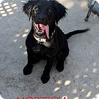 Adopt A Pet :: Morticia - Silsbee, TX