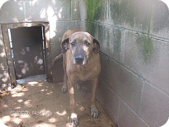 Whippet Mix Dog for adoption in KELLYVILLE, Oklahoma - RYLEE