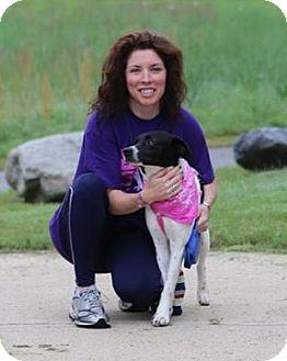 Fox Terrier (Smooth) Mix Dog for adoption in Mount Ida, Arkansas - Reebok