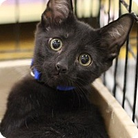 Adopt A Pet :: Baxter - Sacramento, CA