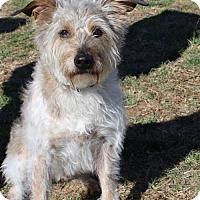 Adopt A Pet :: Shaggy - Nicholasville, KY