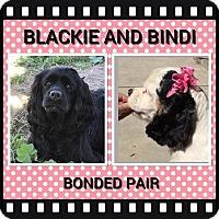 Adopt A Pet :: Blackie and Bindi - Santa Barbara, CA