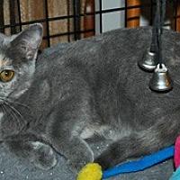 Adopt A Pet :: Kesari - O'Fallon, MO