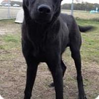 Adopt A Pet :: Barney - Terrell, TX