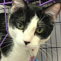 Adopt A Pet :: Zelda - Lexington, KY