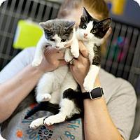 Adopt A Pet :: Will & Grace - Cape Girardeau, MO