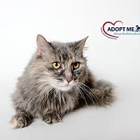Adopt A Pet :: Cedar - Alexandria, VA