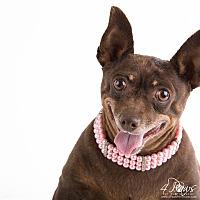 Adopt A Pet :: Baby Dog - Lodi, CA
