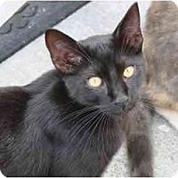 Adopt A Pet :: Blacky - Fort Lauderdale, FL