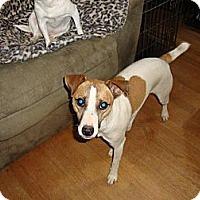 Adopt A Pet :: Prince - Leesport, PA