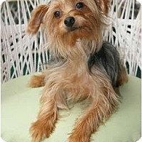 Adopt A Pet :: Freddie - Tallahassee, FL