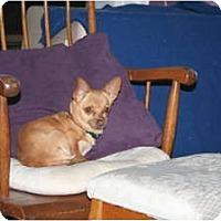 Adopt A Pet :: Rosey - Westfield, IN