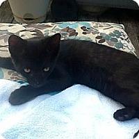 Adopt A Pet :: Runt - Pineville, NC