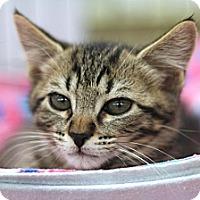 Adopt A Pet :: Greeble - Sacramento, CA