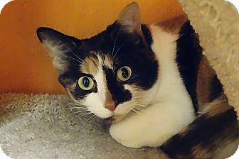 Calico Cat for adoption in Elyria, Ohio - Gabby