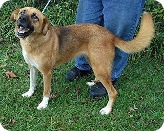 Great Pyrenees/Australian Shepherd Mix Dog for adoption in Allentown, New Jersey - Robin