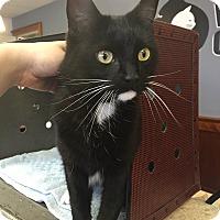 Adopt A Pet :: Abbey - Riverside, RI