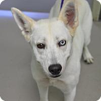Adopt A Pet :: Mia - Erwin, TN