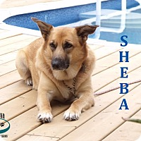Adopt A Pet :: Sheba - Adopted November 2016 - Huntsville, ON