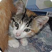 Adopt A Pet :: Harley - Garland, TX