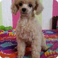 Adopt A Pet :: Bobbie - Crump, TN