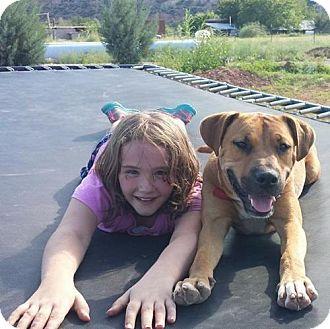 Boxer/Rhodesian Ridgeback Mix Dog for adoption in Clarkdale, Arizona - Markin