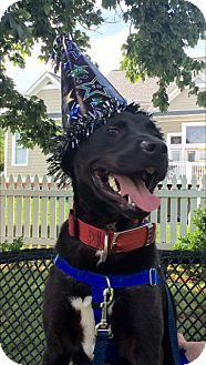 Labrador Retriever Mix Dog for adoption in Kittery, Maine - Stanley