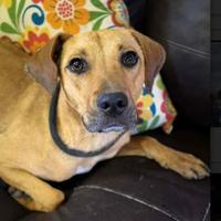 Adopt A Pet :: Garth - justin, TX