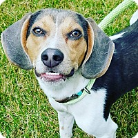 Adopt A Pet :: Perry - Plainfield, IL