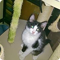 Adopt A Pet :: Poppie - Yuba City, CA