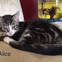 Adopt A Pet :: Alice - Newaygo, MI