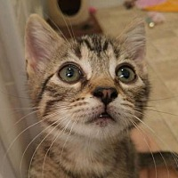 Adopt A Pet :: Elliot-Rutherford - Asheville, NC