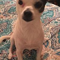 Adopt A Pet :: Patch - Hartford, CT