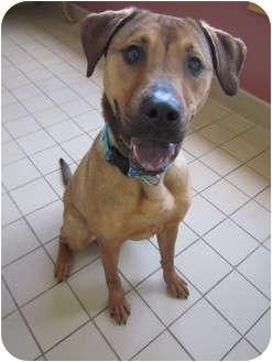 German Shepherd Dog Mix Dog for adoption in Jackson, Michigan - Fran