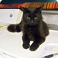 Adopt A Pet :: Dodger - Dover, OH
