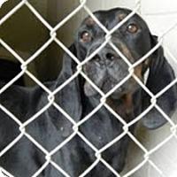 Adopt A Pet :: Dudley reduced Urgent - Staunton, VA