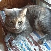 Adopt A Pet :: Aurora aka Hope HL - Schertz, TX