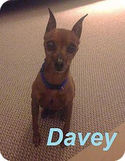 Miniature Pinscher Dog for adoption in Huntsville, Ontario - Davey - Adopted July 2015