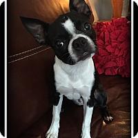 Adopt A Pet :: Sadie - Indian Trail, NC
