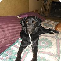 Adopt A Pet :: Tucker - North Jackson, OH