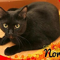 Adopt A Pet :: Nora - Springfield, OR