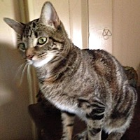 Adopt A Pet :: Maggie* - Trexlertown, PA